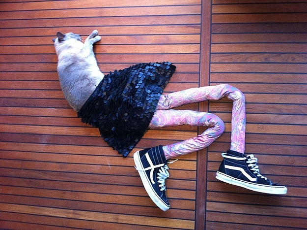 """Gillian Lewis: Spectrum """"Cat in the Hat"""" blog post with Gucci from http://meowtfit.tumblr.com/"""