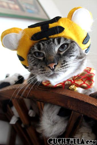 "Gillian Lewis: Spectrum ""Cat in the Hat"" blog post"