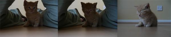 Gillian Lewis Spectrum Blog Post Nervous as a Kitten